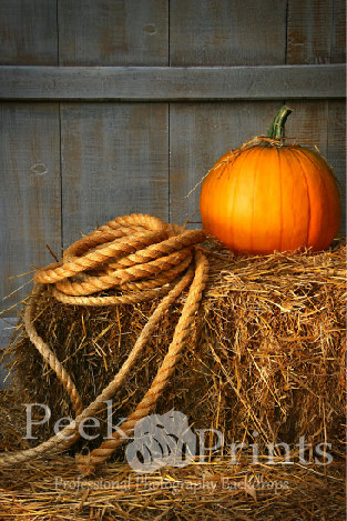 fall photo backdrop