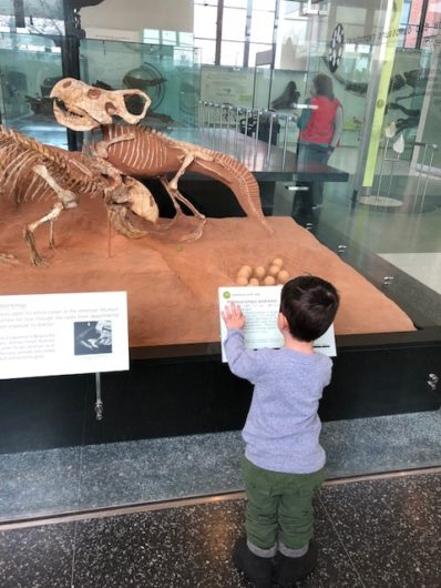 museums for kids in NYC