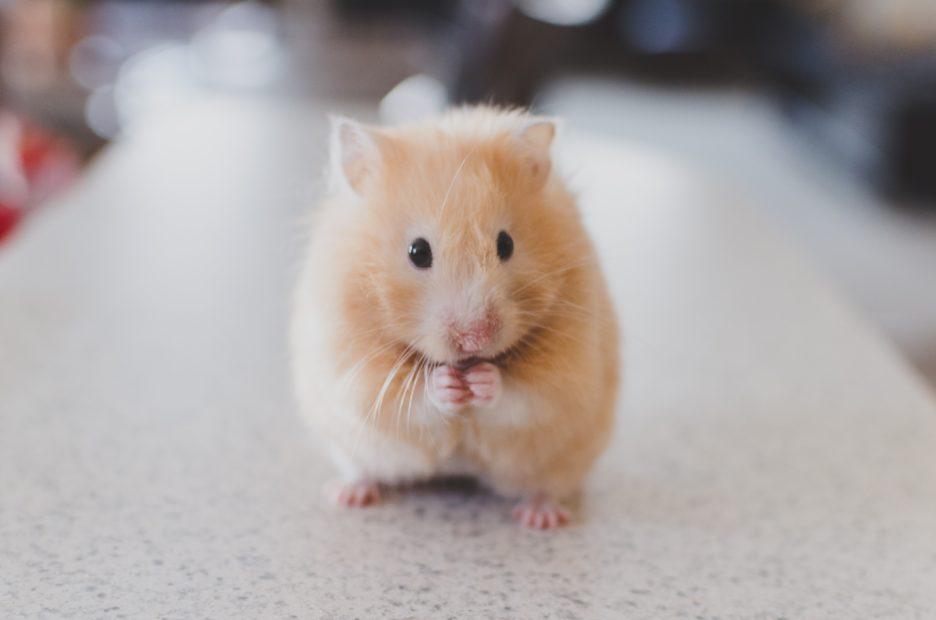 pet ownership tips